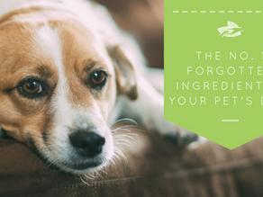 The No. 1 Forgotten Ingredient In Your Pet's Diet