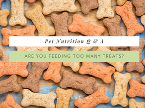 Are you feeding your pet too many treats?