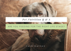 Are you feeding for the right life stage?