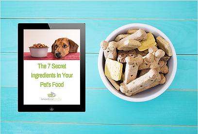 pet nutrition, cat nutrition, ruth hatten, sahaja animal healing, dog nutrition, pet food