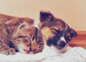What's the best food for puppies and kittens?