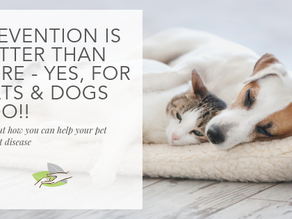 Prevention is better than cure - yes, for cats and dogs too!