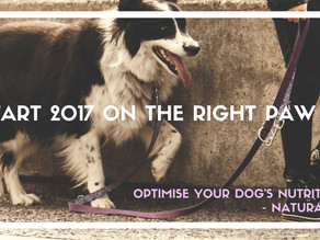 Optimise Your Dog's Nutrition - Naturally