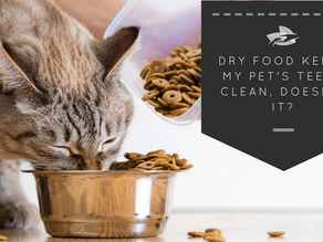 Dry food keeps my pet's teeth clean, doesn't it?