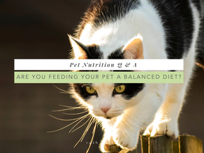 Are you feeding your pet a balanced diet?