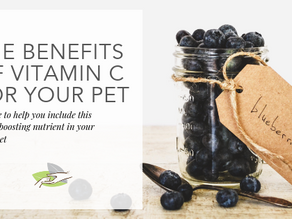 The Benefits of Vitamin C For Your Pet
