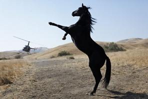 wildhorses-e1381864334628.jpg