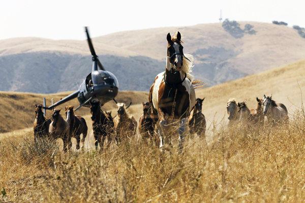 Wild Horses_Horses & Helicopter.jpg