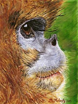 Guizhou snub-nosed monkey