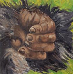 Rwandan Mountain Gorilla