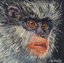 Endangered monkey