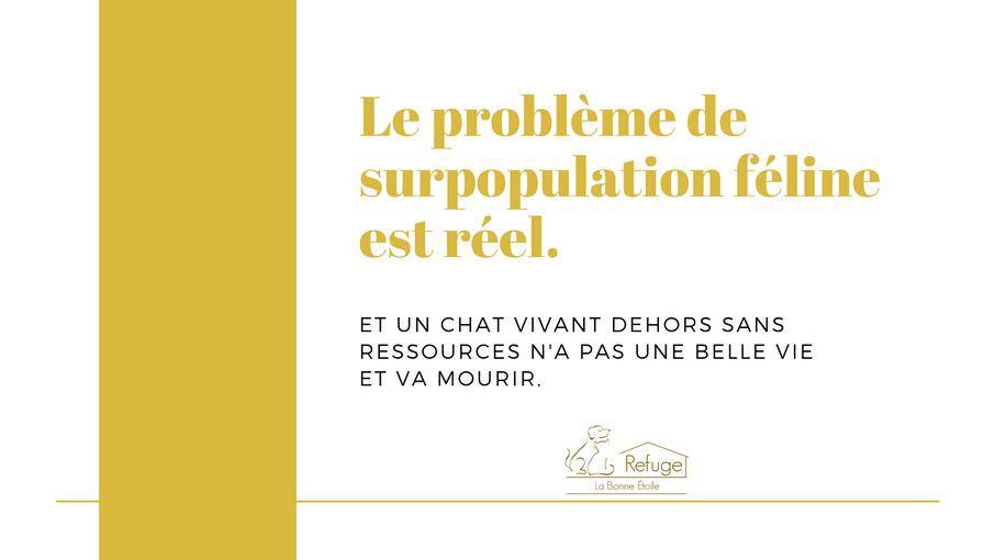 surpopulation_féline.png