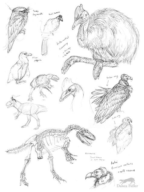 Danea Fidler - Assignment 3 - Sketchbook