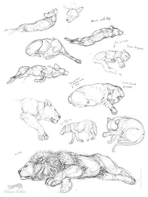 Danea Fidler - Assignment 4 - Sketchbook
