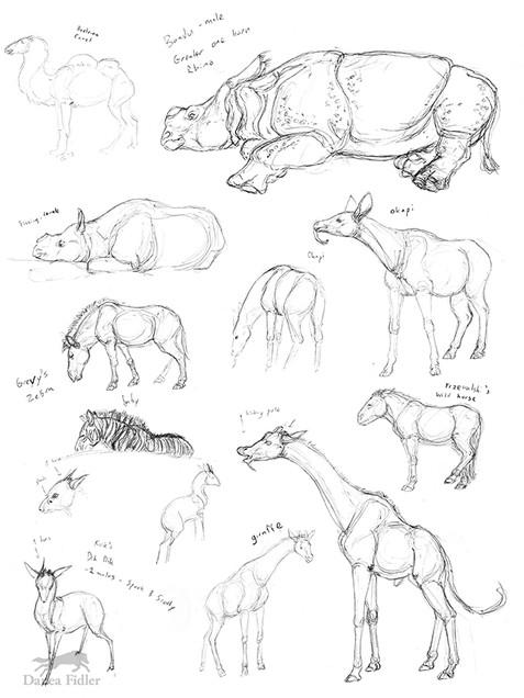 Danea Fidler - Assignment 5 - Sketchbook