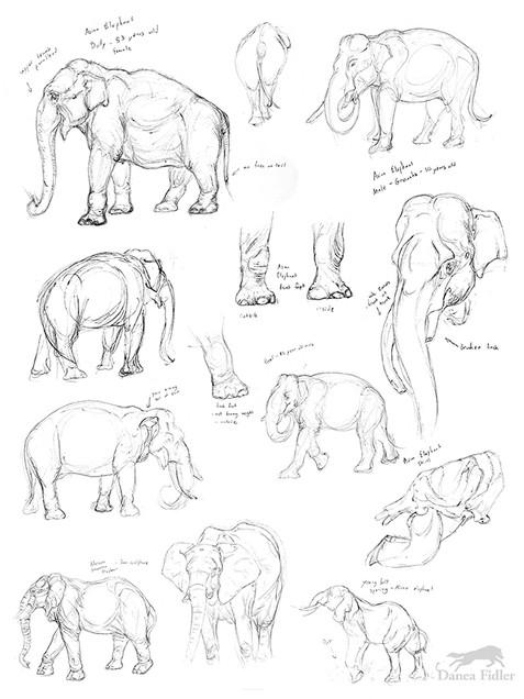 Danea Fidler - Assignment 6 - Sketchbook