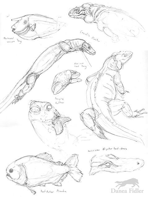 Danea Fidler - Assignment 2 - Sketchbook