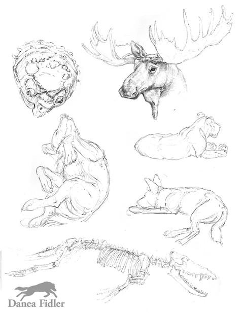 zoo sketches Nov-Jan 15 - WEB.jpg