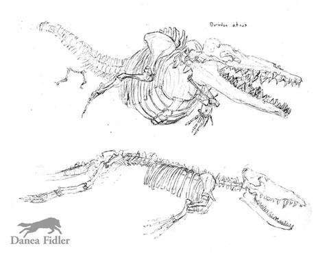 whale sketches - WEB.jpg