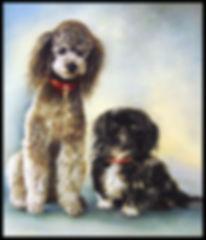 Portrait de chiens au pastel sec - www.plazamargarita.com