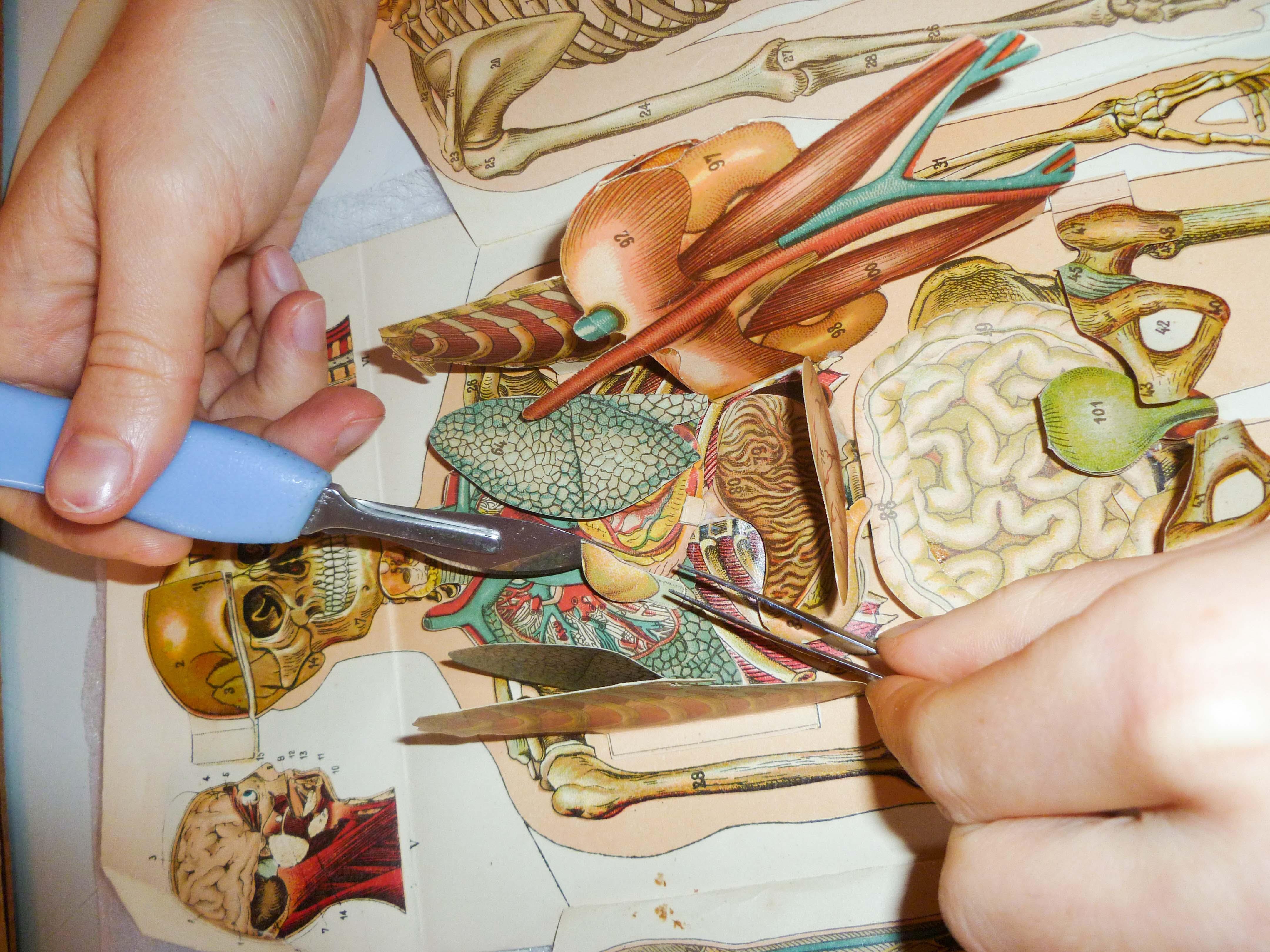 Restauration, maquette de médecine
