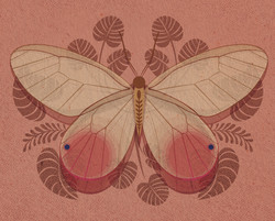 Butterfly_Pink_Illustration_Greeting Car