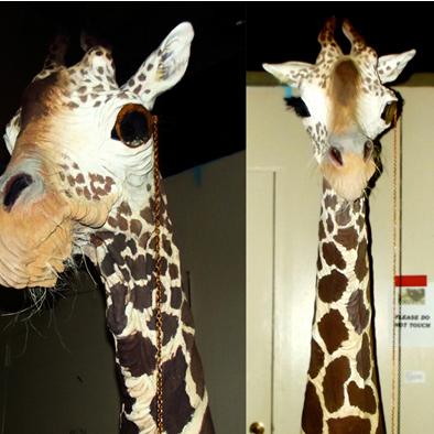 Galileo_Giraffe_Sculpture_Taxidermy_Art_