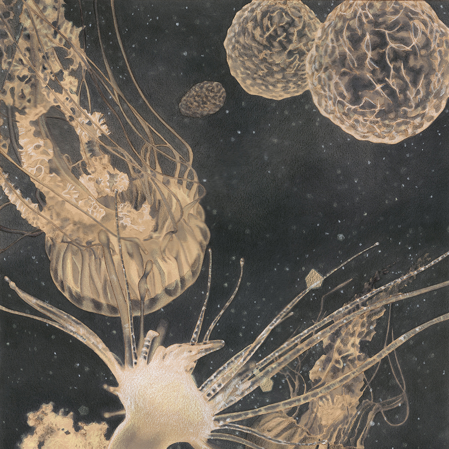 Jellyfish Development_Colored Pencil_Art