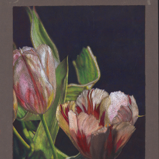 Flowers_Art_Drawing_Illustration_Realist