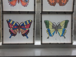 Batley Butterfly House