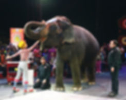 Ringling Bros Super Heroes Tour
