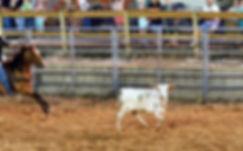 Roped Longhorn Marshall Putnam County Fair 20143