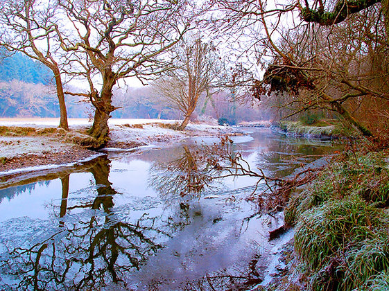 A Winter's Day - Canaston Woods
