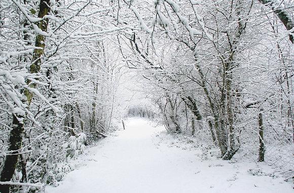 Snow at Scolton Manor