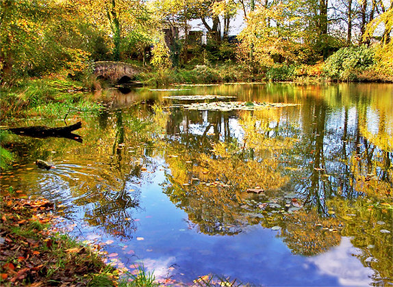 Autumn at Withybush Woods