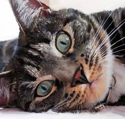 Mia - Cat Portrait