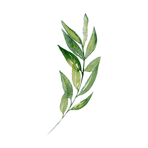 —Pngtree—watercolor_leaf_transparent
