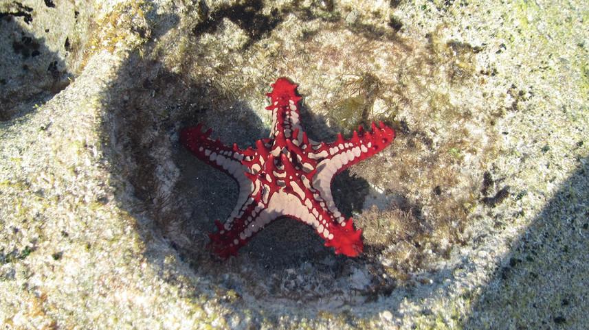 starfish-431768_1920.jpg