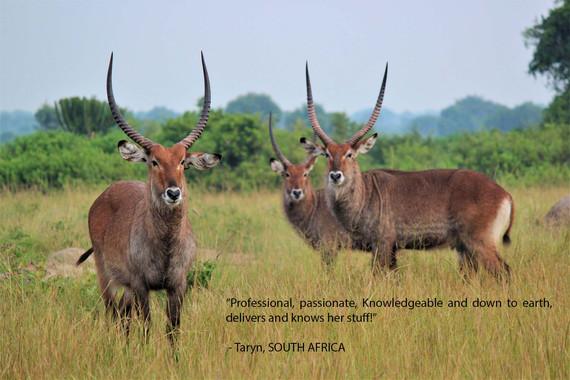 Wildlife - Taryn - SA.jpg