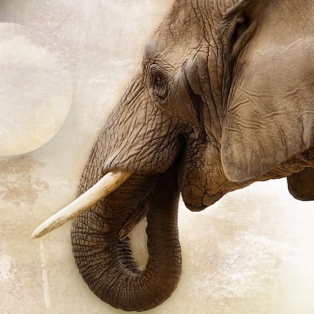 elephant-1034382_1920.jpg