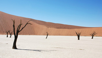Desert Pan