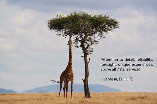 References - Giraffe - Europe.jpg