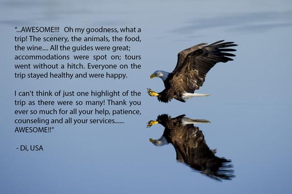 Eagle - Di - USA.jpg