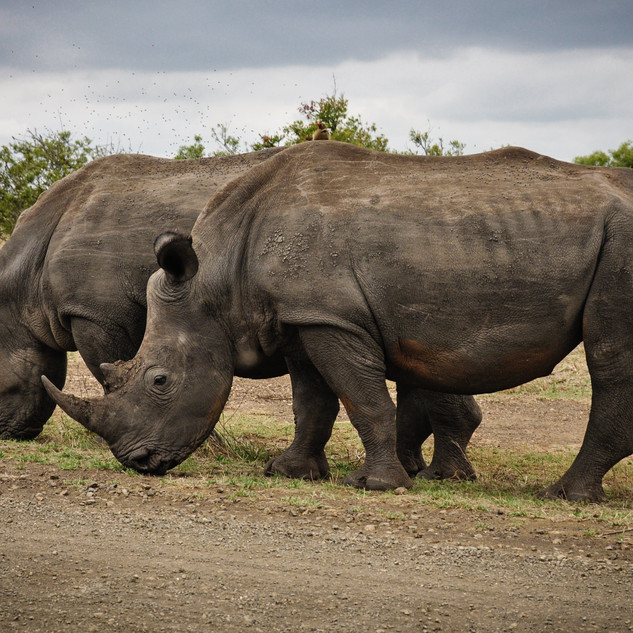africa-animals-big-631292[1].jpg