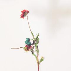 wildflower+Pokemon, 2016