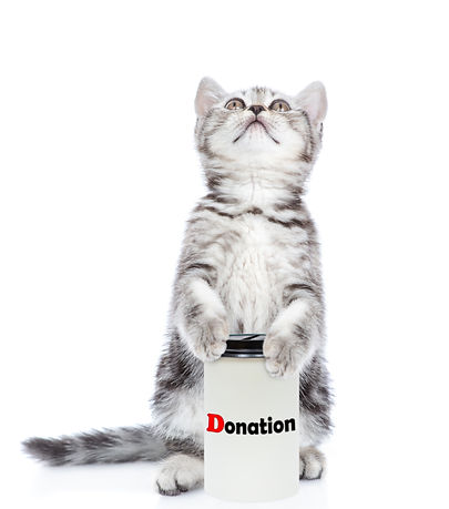 Kitten with a donation can, asking money