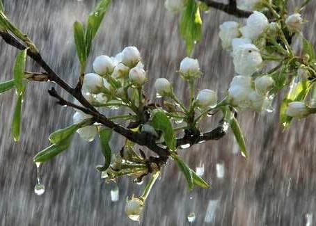 به باران بهاری احترام بگذار