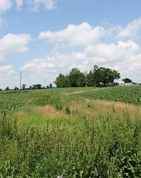 reduced_farmland5.JPG