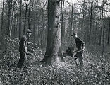 1949-Townsend-Woodland Management on Lou