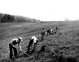 1949-near Hockessin-Conrad FFA plant tre
